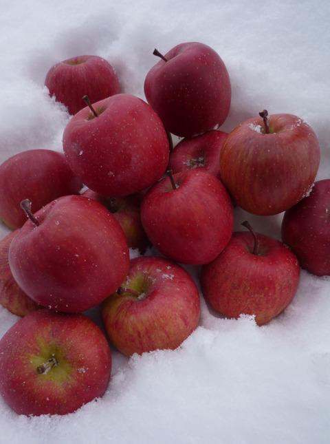 越冬熟成りんご